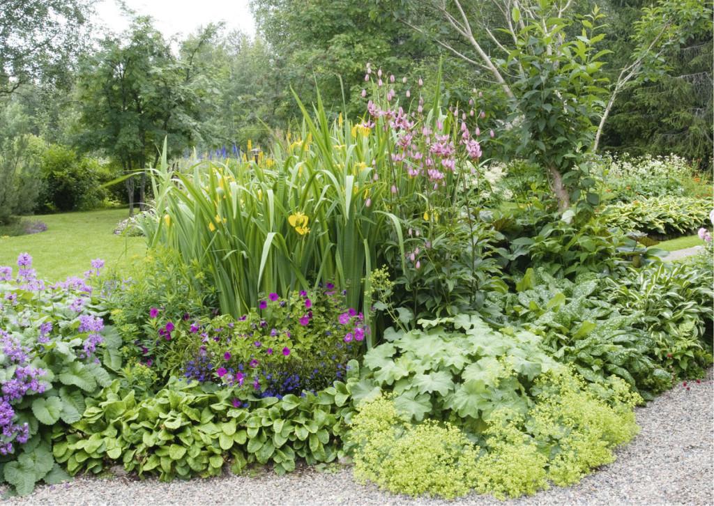 Monen erilaisen kasvilajin reunus on ilmeikäs.