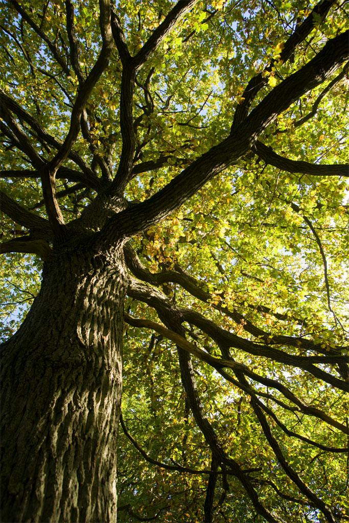 vanha puu - puiden kuntokartoitus