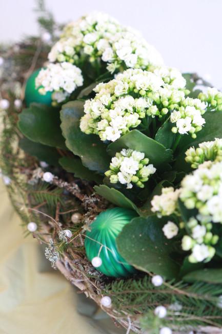 Tulilatva on helppohoitoinen kasvi, josta on iloa myös joulun jälkeen. Kuva: Kauppapuutarhaliitto