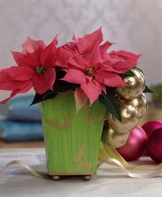 Vaaleanpunainen joulutähti