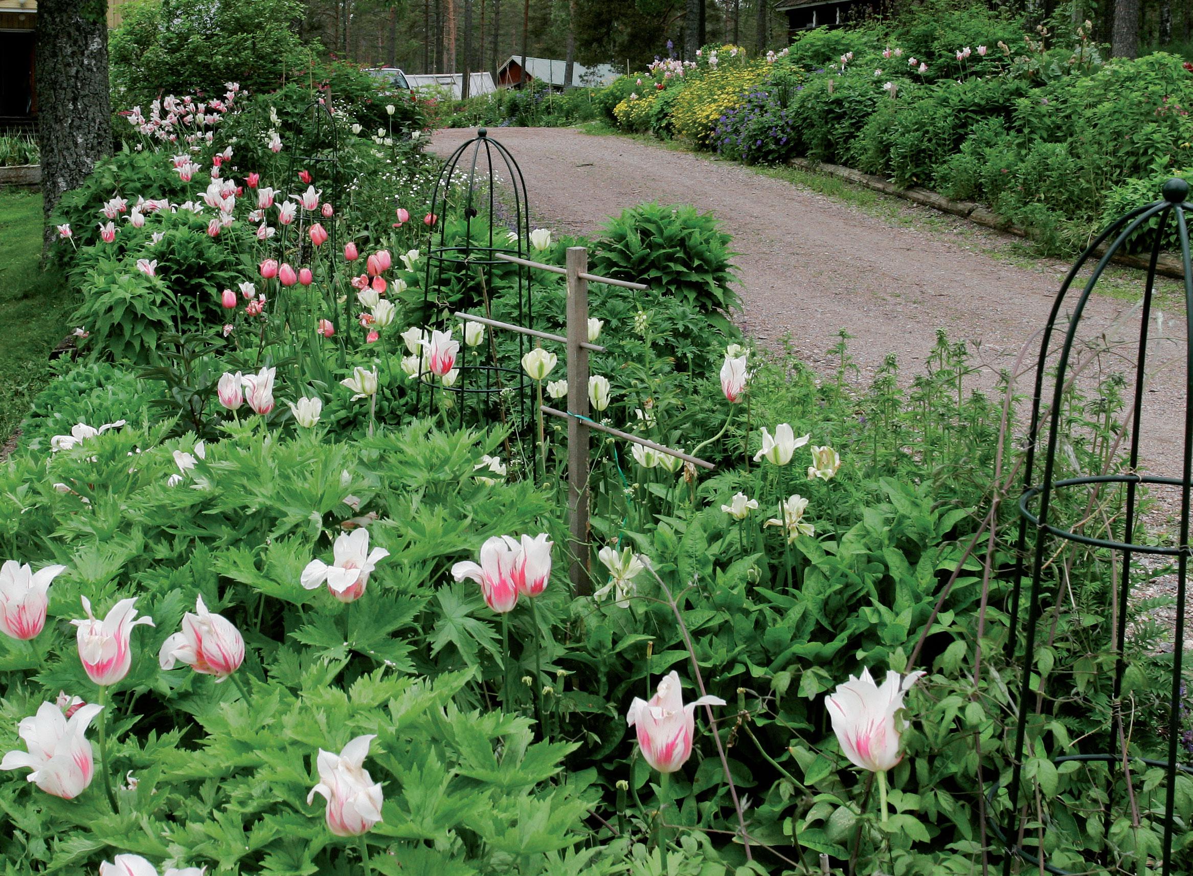 Nurmikon päälle perustettu kohopenkki on rehevä jo seuraavana vuonna perustamisesta, kun siihen istutetaan isokokoisia, peittäviä kasveja