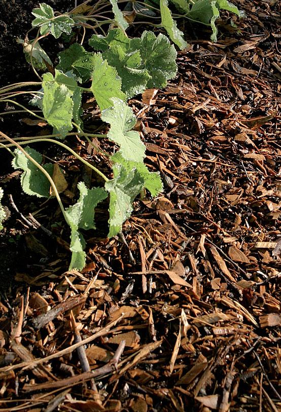 Luontoon hyvin sulautuva havupuukuorike pehmentää istutusalueen reunaa ja estää mullan valumisen käytävälle