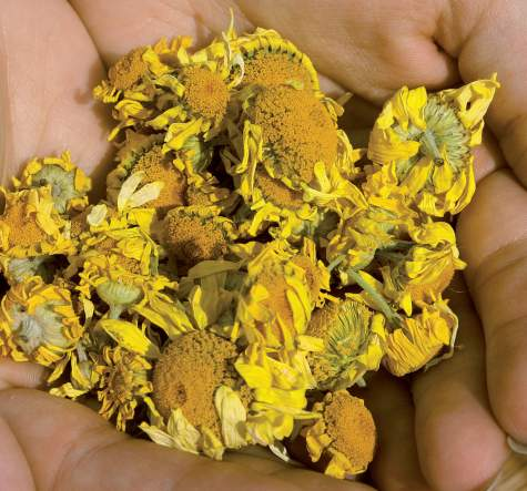 Keltasauramon kukinnot värjäävät langan tai kankaan keltaiseksi.