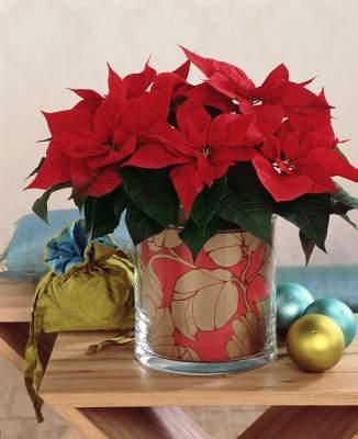 Tapetti joulutähden ruukun koristeena