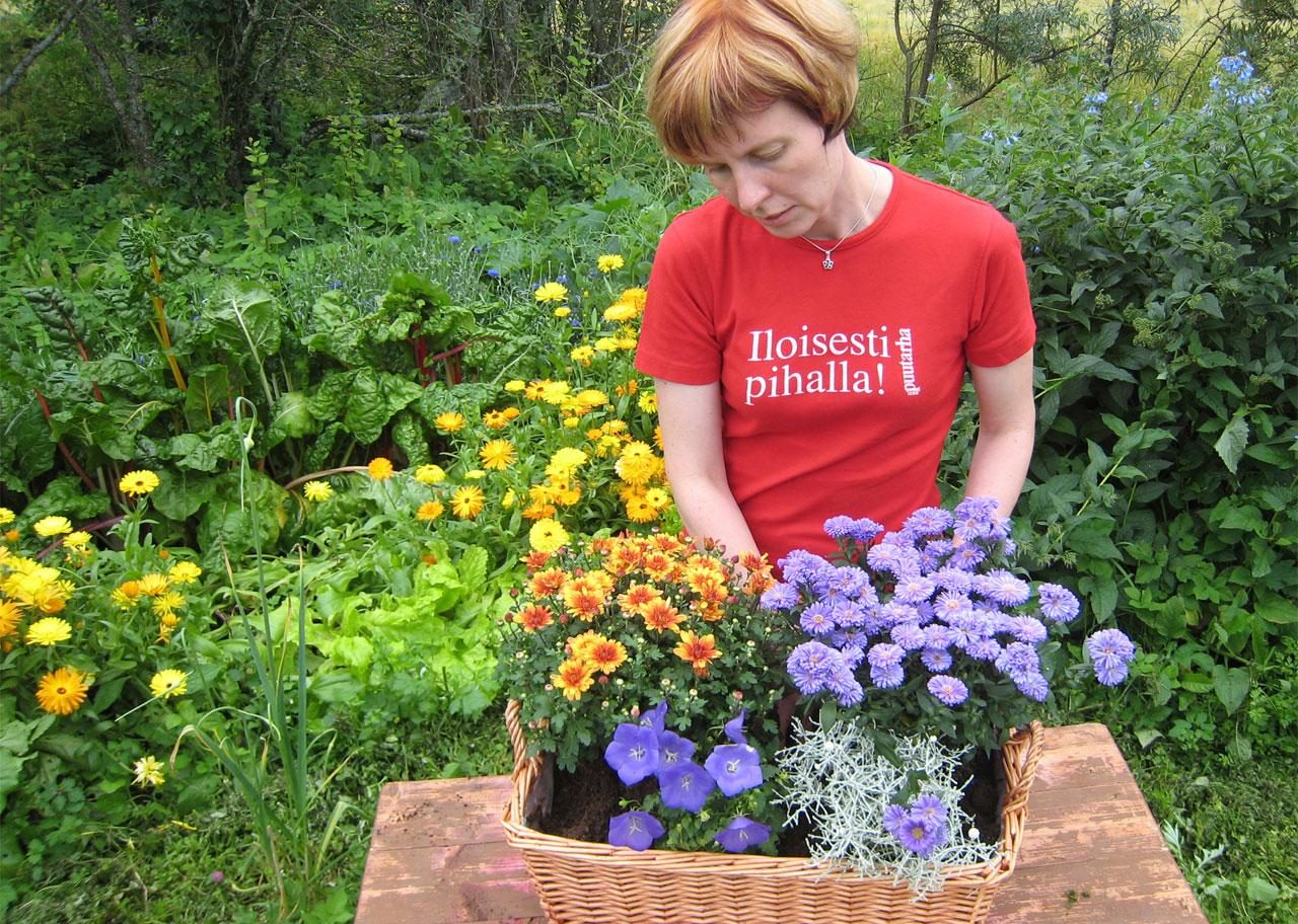 Värikkäät  ruukkukrysanteemit, syysasterit, koristekaalit ja pensastädykkeet kestävät pikkupakkasia ja siten ilahduttavat pitkään syksyyn.