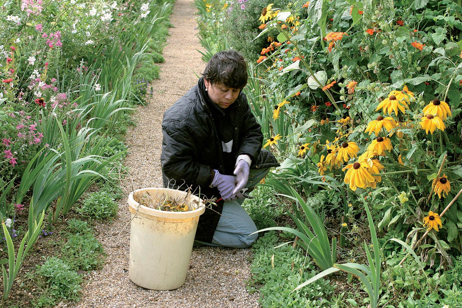 Givernyn puutarhassa on ympäri vuoden myös amerikkalaisia ja meksikolaisia vapaaehtoistyössä.