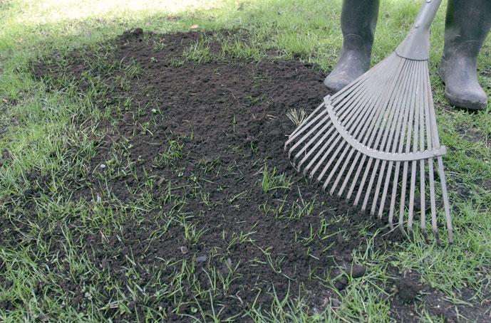 Savimaa nurmikko