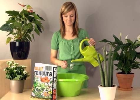 Uusi kukkamulta kostutetaan erillisessä astiassa ennen ruukutusta. Sopiva suhde on noin ½-1 dl vettä multalitraa kohti.