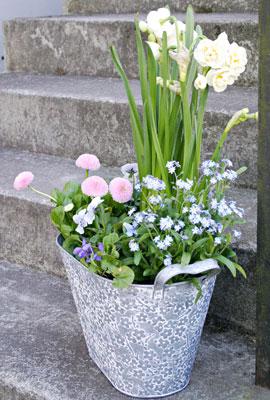Kevätkukkaistutus sisäänkäynnin vieressä kutsuu sisään.