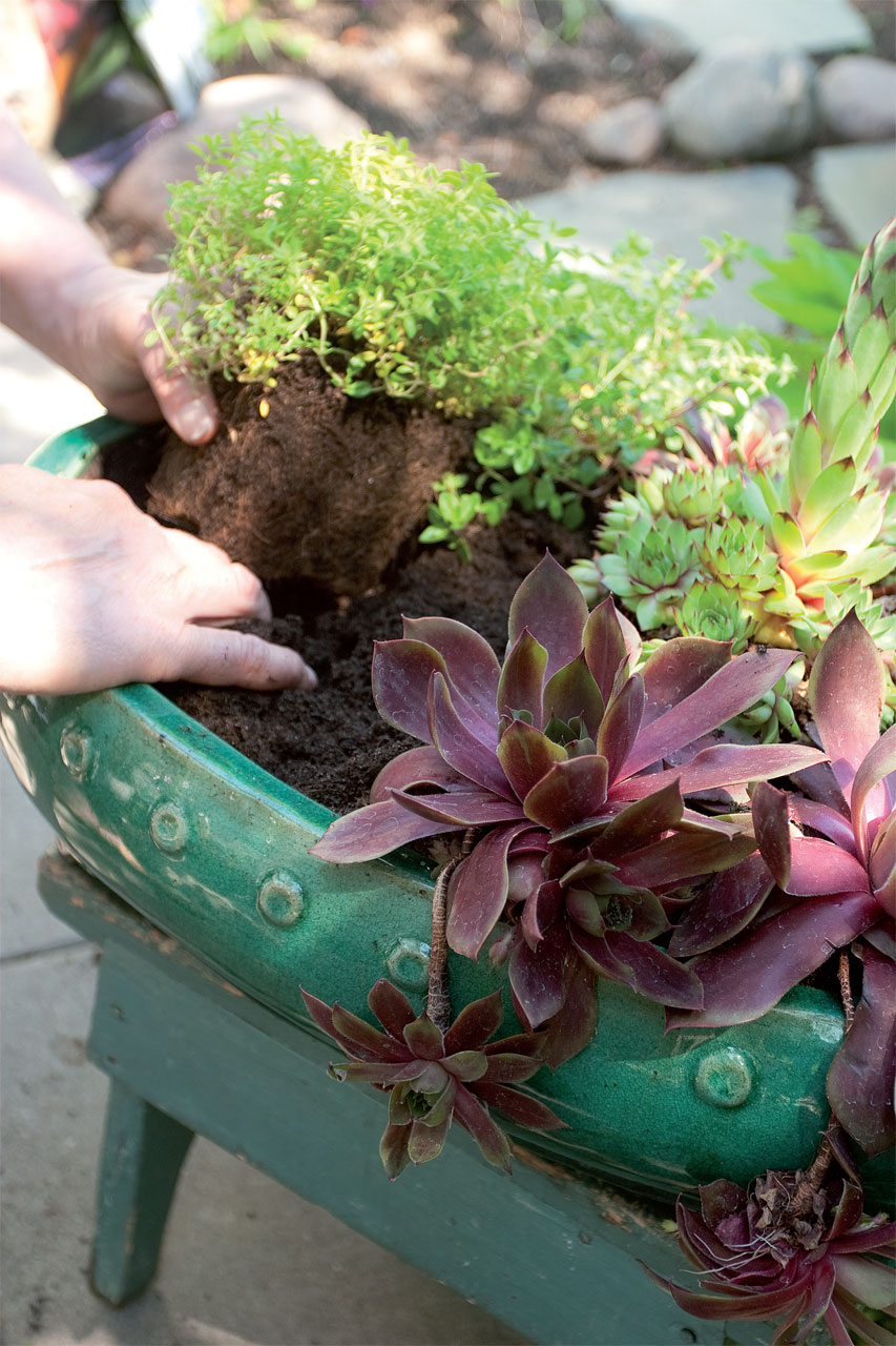 Istuta kasvit puutarhamultaan, johon on sekoitettu hiekkaa.