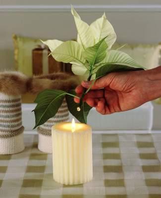 Pidä kermanvärisen joulutähden leikko-oksien tyviä hetken aikaa kynttilänliekissä heti leikkaamisen jälkeen.