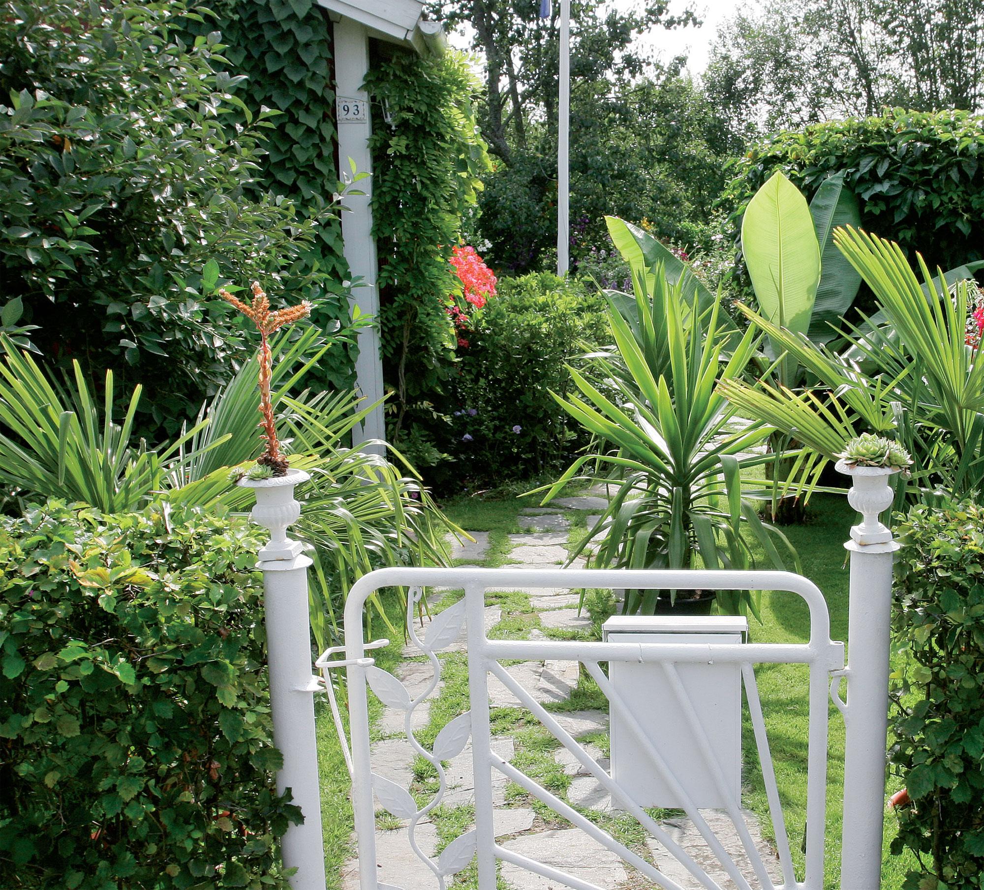 Vehreän pihan salaisuus on vieressä virtaava puro, josta saa kasteluvettä vaivatta. Viikottainen kastelulannoitus pitää kasvit hyvässä kasvussa.