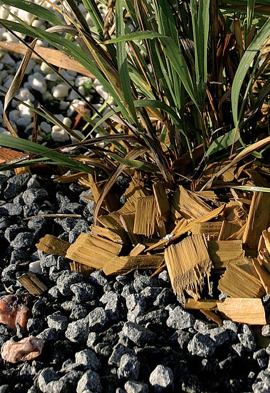 Koristekatetta voit levittää myös aivan kasvin juurelle