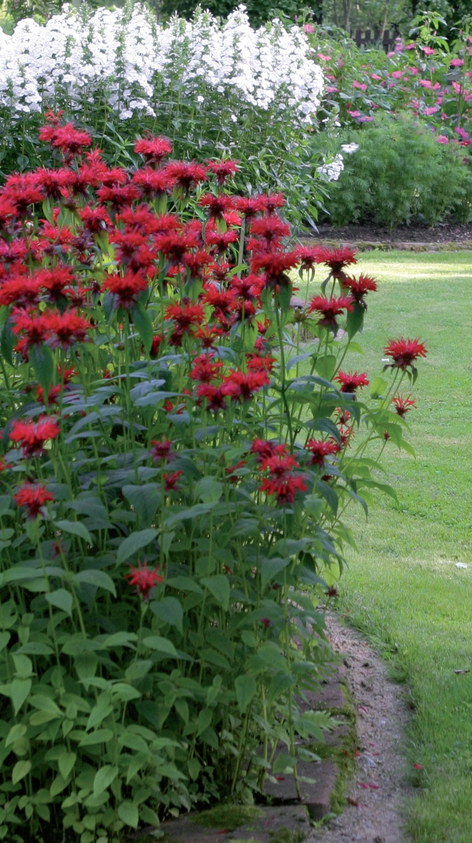 Pienet pyöreät kukkapenkit tuovat rytmiä puutarhaan.