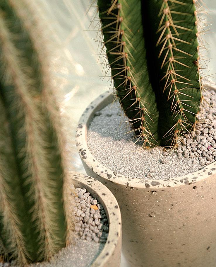 Hopeanharmaa hieno hiekka ja pienirakeinen koristekate luovat aavikkomaisen tunnelman pylväskaktuksen ympärillä.