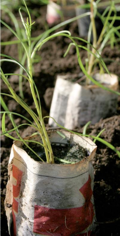 Taimien esikasvatus –ohjeet: Toiveena terhakat taimet