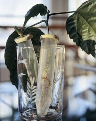 Pistokkaiden juurrutus on huoletonta, kun sujautat ne yksitellen kumikorkin reiästä leikkokukkien tyvessä käytettävään vesiputkiloon.
