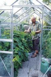 Lasse Partasen pienessä kasvihuoneessa kasvaa tomaattia ja jo satoa tuottanut viiniköynnös, joka kaipaa myöhään syksyllä reilun leikkauksen.