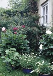 Ikkunanaluspenkkiin on valittu entisajan kaunotar-kukkia