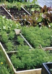 Hyötykasvit kasvavat puukehikoissa