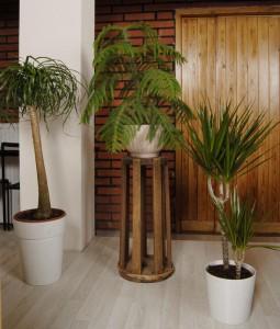 Nasa tutki eri huonekasvien kykyä poistaa hengitysilman kaasuja
