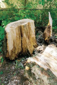 Laho etenee puussa helpoiten pystysuunnassa.