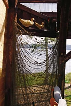 Vanha kalaverkko on muisto niiltä ajoilta, kun vanha sauna toimi uuden hirsisaunan valmistuttua vuosia kalastusvälineiden varastona.