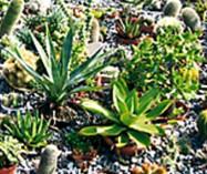 Tee puutarhaasi oma aavikko mehikasveilla