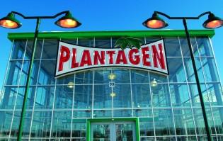 plantagen (2)