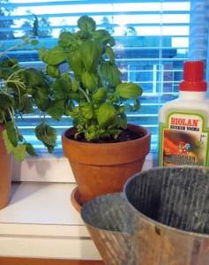 Kasvata yrtit ikkunalaudalla