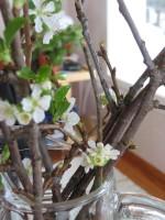 Kirsikkapuun oksia