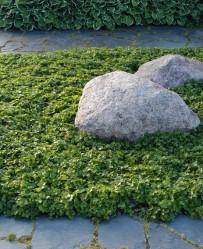 Liuskekivi sopii suomalaiseen puutarhaan