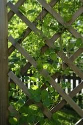 Köynnöskasvit nousevat säileikköjä pitkin ylös