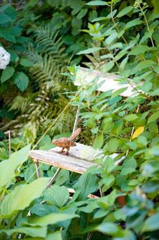Pikkulintu levähtää vanhalla kuun liljojen seassa olevalla tuolilla.