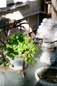 Pieniä asetelmia löytyy eri puolilta puutarhaa. Kuvassa kaunis ruukku ja betoninen hedelmäkori.