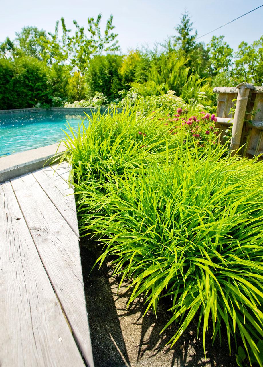 Pehmeät ruohomättäät ja muut istutukset tuovat altaalle aasialaista tunnelmaa.