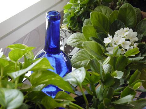 Kastelupullo huonekasvien joukossa ikkunalaudalla