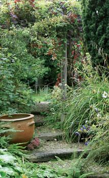 Puutarhassa kasvaa satoja eri lajeja