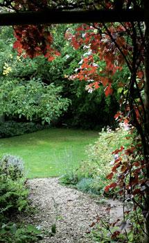 Pergolaa peittävä aitoviini 'Purpurea' on parhaimmillaan keväällä ja alkukesällä.