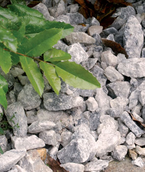 Karkea kiviaines on katteena harvemmin käytössä, mutta se näyttää hyvältä ainavihantien kasvien alla. Varjoisassa kasvupaikassa se tuo käytävän reunaan valoisuutta.