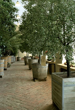 Uppsalan yliopiston kasvitieteellisen puutarhan orangeriaa käytetään yhä sen alkuperäiseen tarkoitukseen, suurten sitrus- ja koristepuiden talvettamiseen.