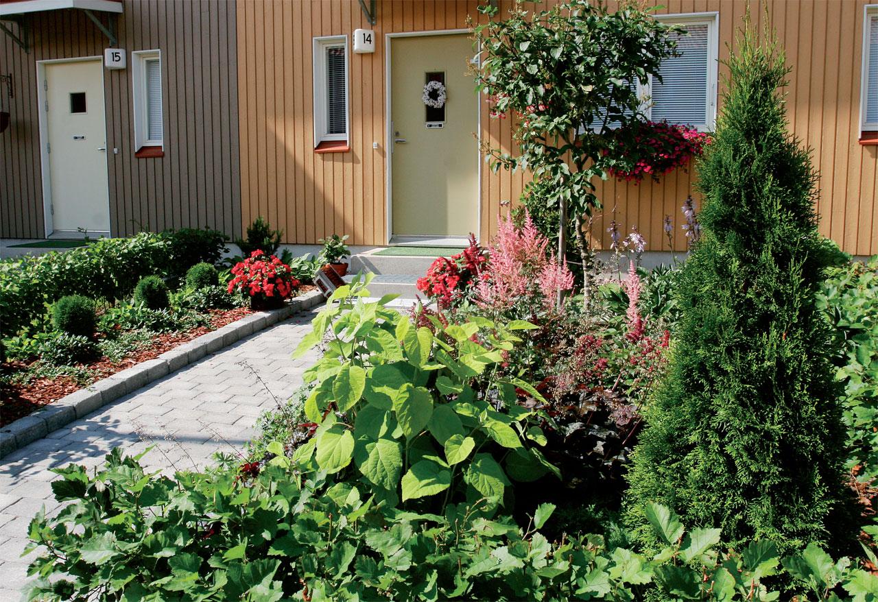 Huomioi sisääntulossa kasvien kasvukorkeudet