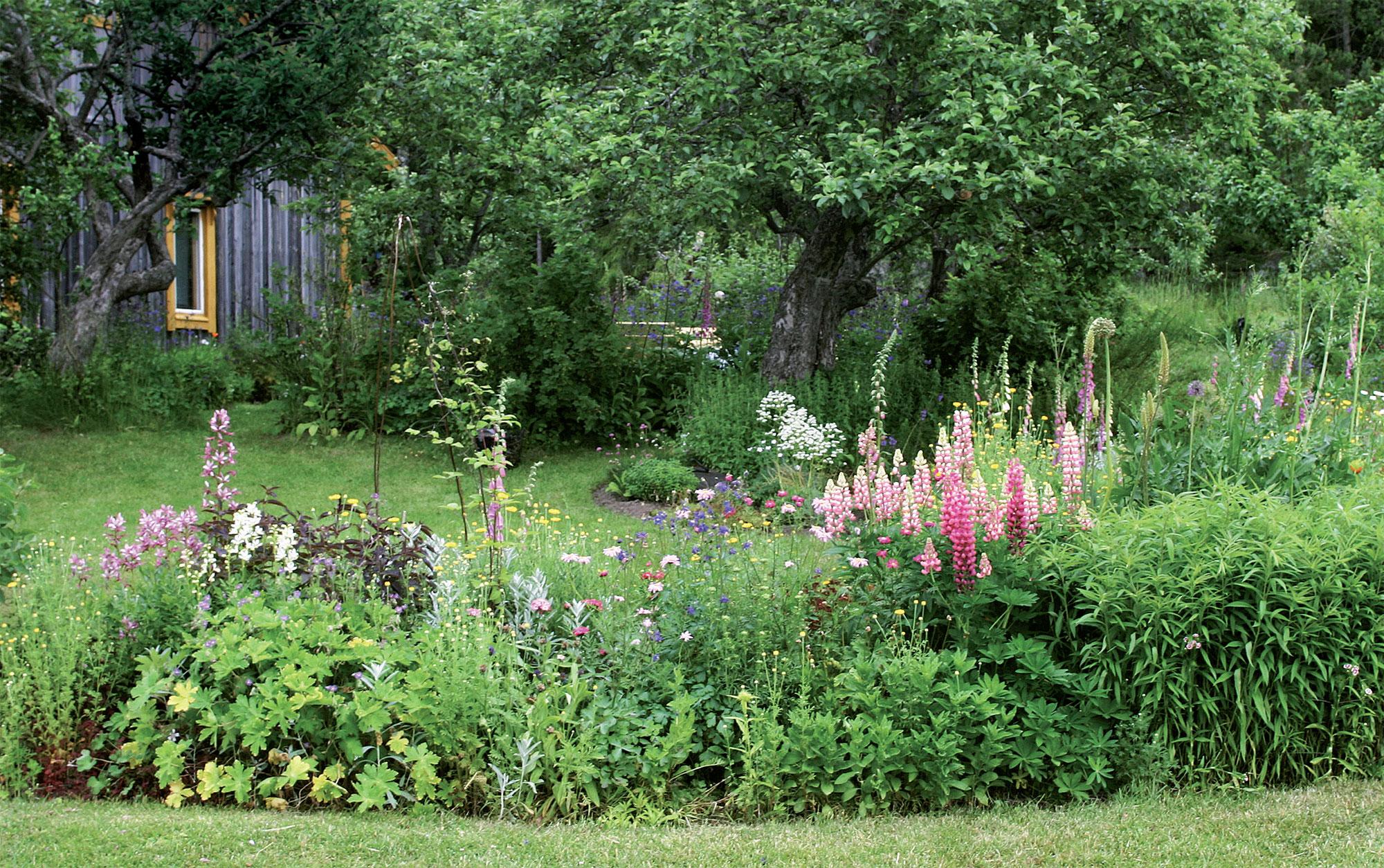 Kukkapenkissä kukassa oleva kirjolupiini ei leviä komealupiin tapaan.