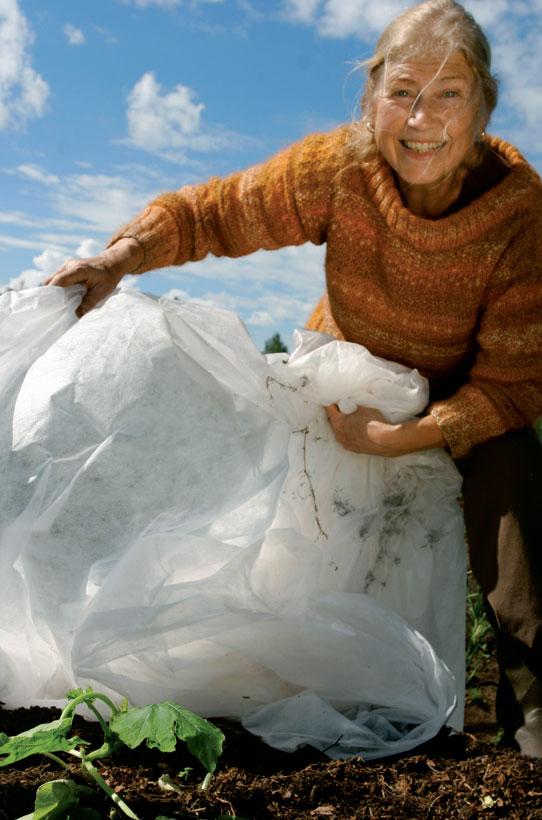 Jättikurpitsan lehdet on hyvä suojata kylmältä vaikka harsolla