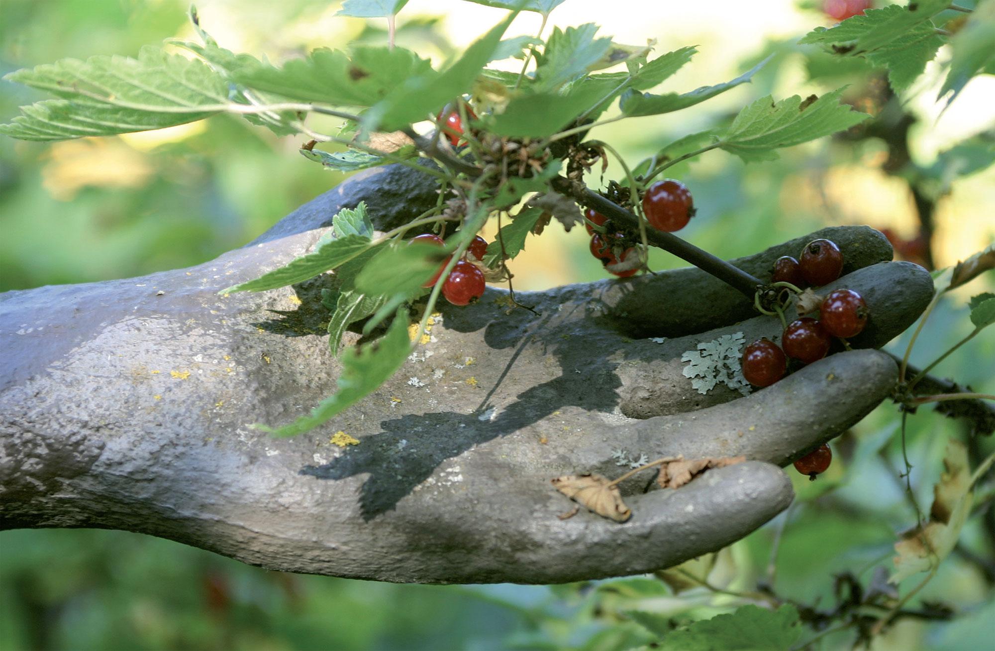 Patsaan käsi pitenee punaherukan oksaa.