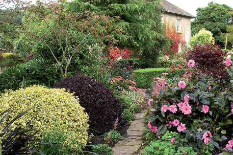 Värit ovat tärkeitä ympäri vuoden. Daaliat tuovat iloa pitkälle syksyyn, mutta myös värikäslehtiset pensaat piristävät pihan ilmettä. Etuvasemmalla kelta- ja tummanpunalehtiset, Mildredin muotoilemat kielopuut (Pittosporum tenuifolium). Talvea ajatellen Mildred suosii myös puita, joilla on kauniit rungot tai ainavihannat lehdet.