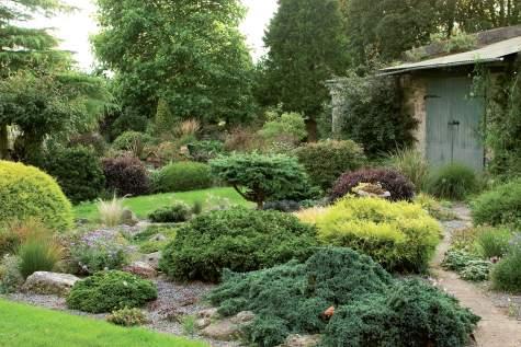 Kivikossa viihtyvät mm. katajat (Juniperus) 'Super Star' ja 'Pfitzeriana', tuija (Thuja) 'Rheingold', sininen törmäkukka (Scabiosa), japaninkääpiökirsikka (Prunus incisa) 'Ko Yo Mi Mai' ja punalehtinen kielopuu (Pittosporum) 'Tom Thumb'.