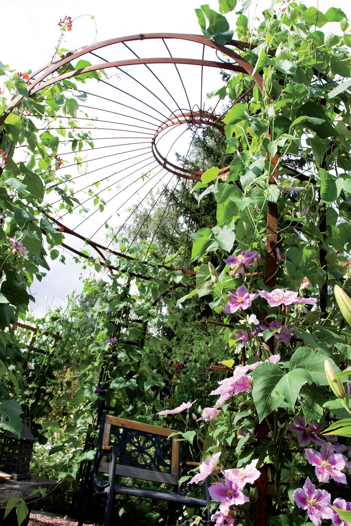 Ympyrän keskellä olevassa pergolassa kukkii 'Piilu'-kärhö.