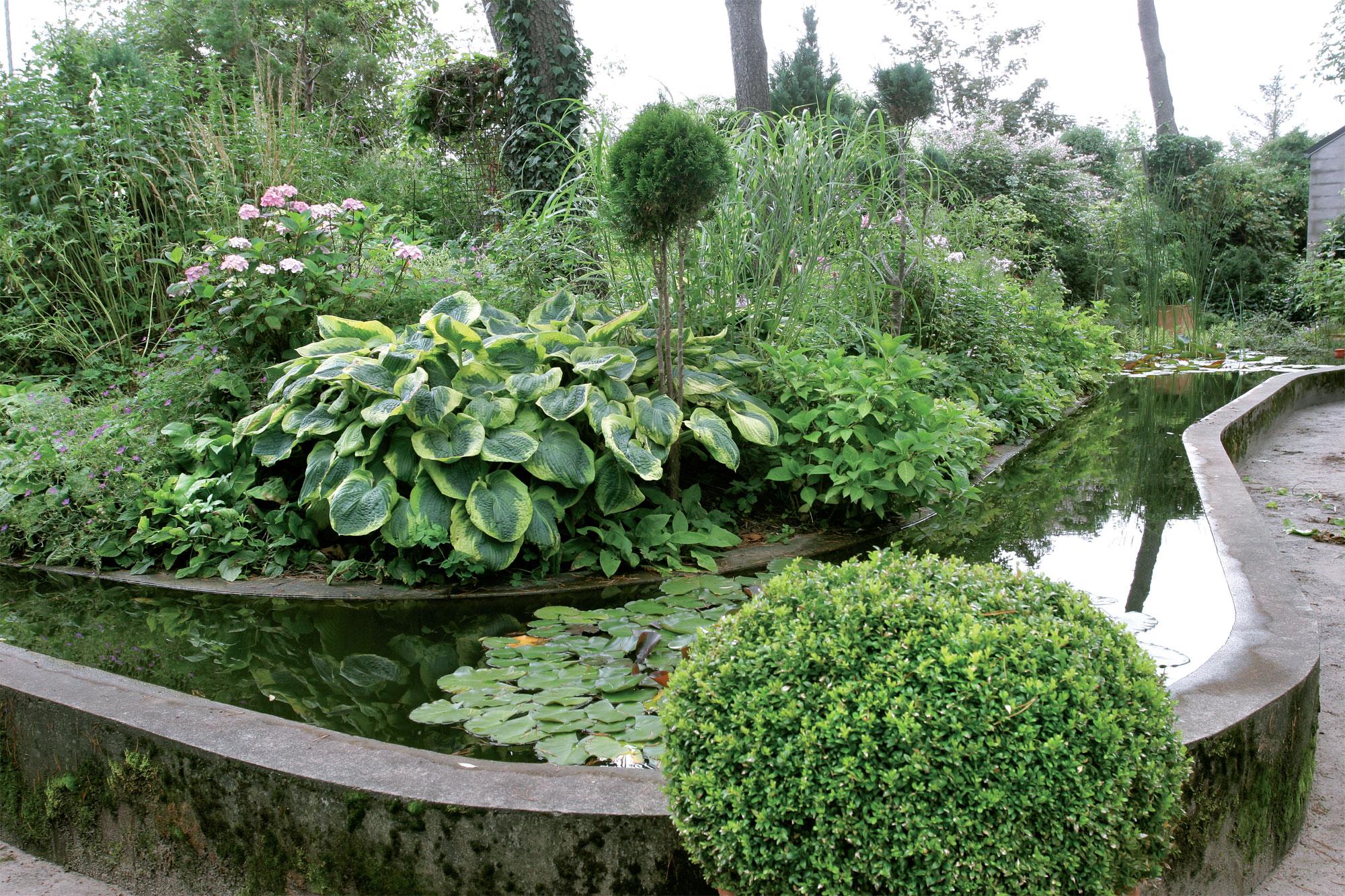 Piha-altaan taustalla Iris-kumpareen kasvillisuus levittäytyy rehevänä ja monimuotoisena. Altaaseen ohjattua sadevettä käytetään kuivina aikoina kasteluun.