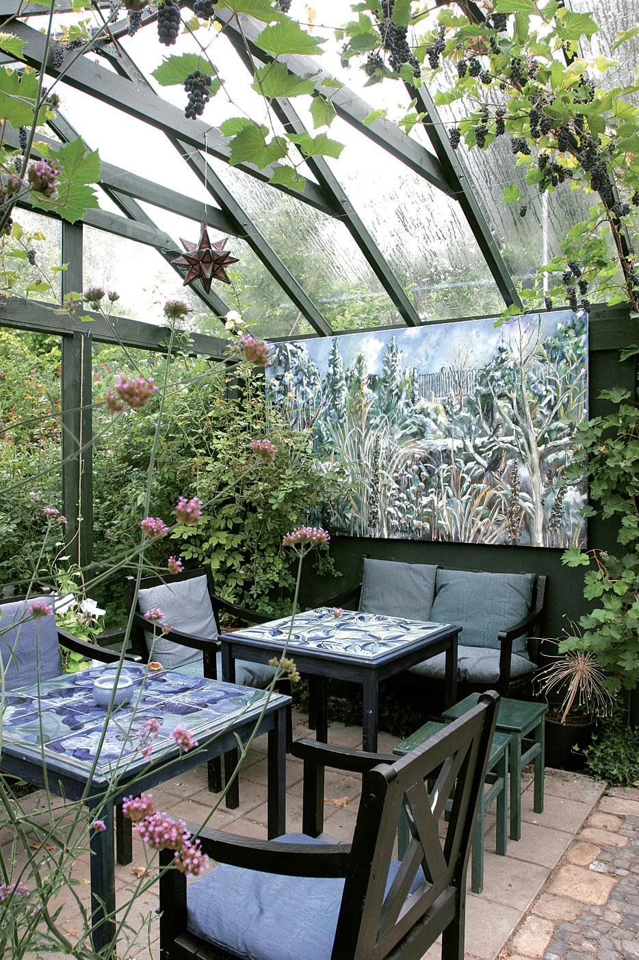 Kasvihuone voi olla näinkin viihtyisä. Etualalla kukkii jättiverbena (Verbena bonariensis), katosta roikkuvat kypsät viinirypäletertut (Vitis vinifera).